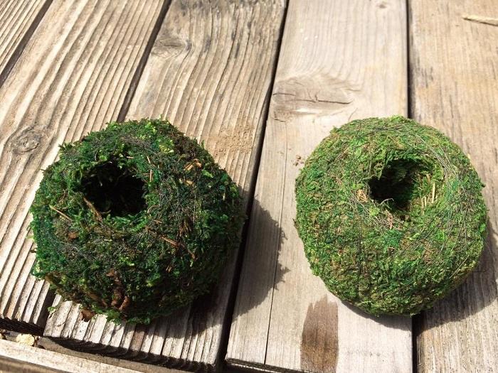 左が、しっかり水を染み込ませた苔玉になります。水を十分吸い上げて重くなったらOKです。
