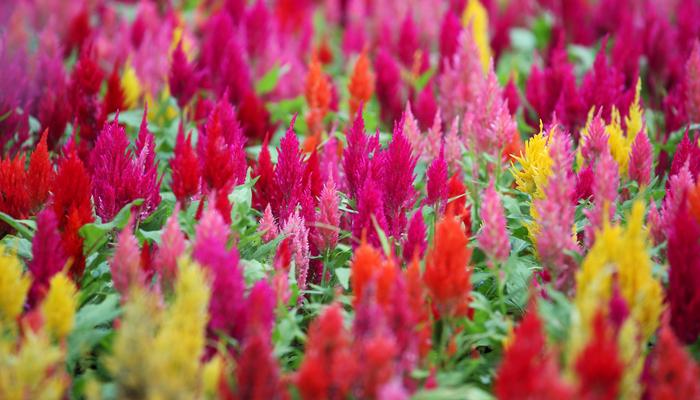 8月の誕生花一覧誕生日の花と誕生月の花花言葉 Lovegreenラブ