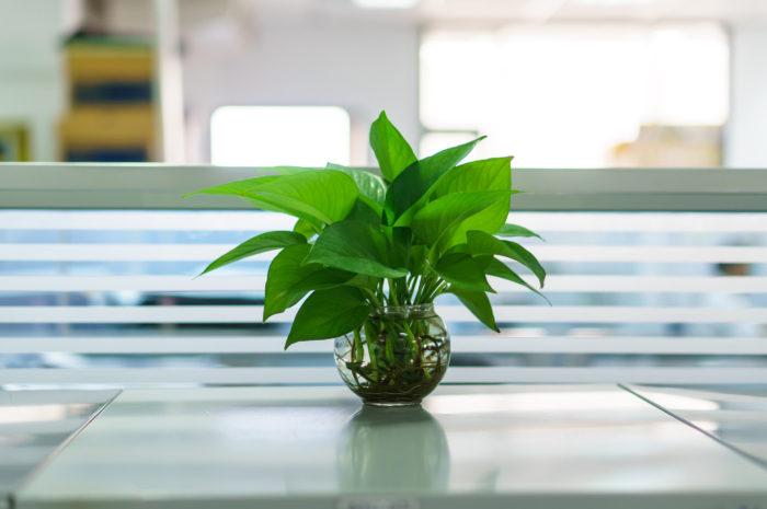 Lovegreen - Piante da ufficio resistenti ...