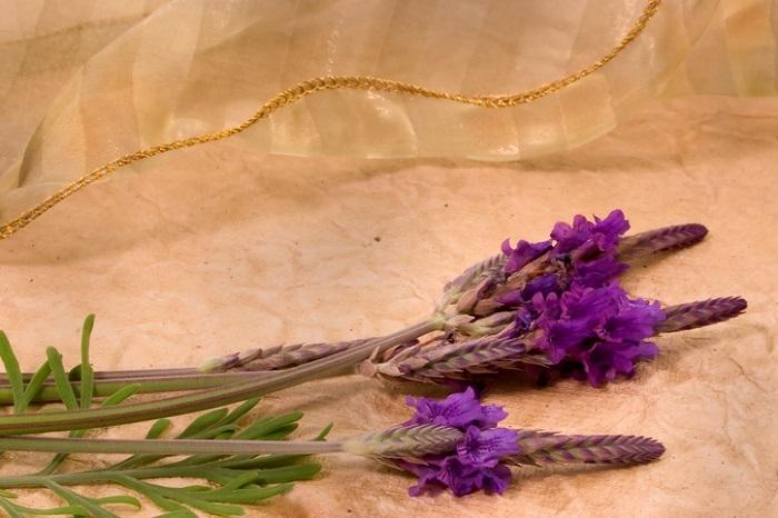 半耐寒性あり 開花期10~6月  レースのように細かな切れ込みの入ったような葉と3つに花穂が分かれている特徴的なラベンダーです。  やや寒さに弱いので、冬は霜の当たらないのき下などに置きましょう。開花は初夏が中心ですが、花が終わった後に刈り込んでおくとどんどん花芽が上がってきます。環境が合っていると長くお花を楽しめます。