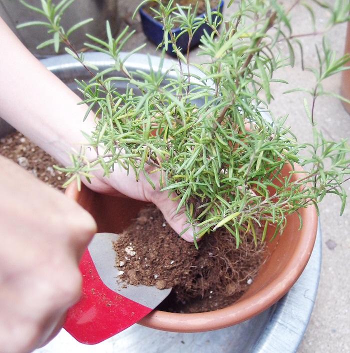 土を隙間に入れて植えていきます。上まで土はいれないで、2cmくらいは開けておきましょう。