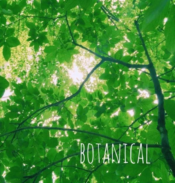 ボタニカル(botanical)とは「植物の」「植物から作られた」という意味になります。  ボタニカルも様々。わたしたちの身の回りには植物はたくさん存在しています。日々の中の「ボタニカル」をいくつかご紹介します。