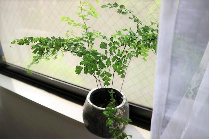 観葉植物の性質によって、置く場所が異なります。管理は風通しの良いところの方が状態が良くなると思います。