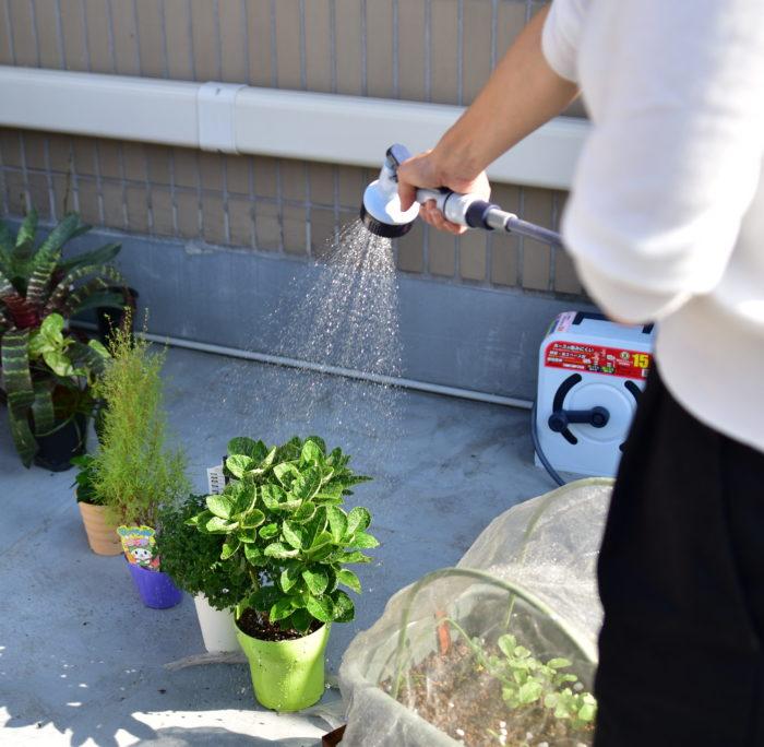 植物の水やりというと、一般的には土にやるイメージがあると思いますが、葉っぱからも水を吸収するんです。そのため、水やりをするときは土だけでなく、葉全体に水がかかるようにすると植物が喜んでくれますよ。  特に湿度が高い熱帯雨林に住むような観葉植物は、根よりも葉っぱから水分を吸収する能力が備わっているようです。植物の生息地や育てている環境も、頭に入れて水やりをしましょう。