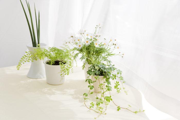 ボタニカル(botanical)とは「植物の」「植物から作られた」という意味になります。  ボタニカルといっても様々。私たちの身の回りに植物はたくさん存在しています。日々の中の「ボタニカル」をいくつかご紹介します。