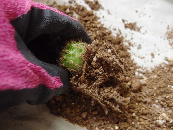 土が乾いていると、土をほぐすのも簡単です。