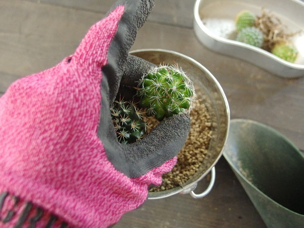 寄せ植えも、ただ寄せて植えるのではなく、大体のレイアウトをイメージして置くとスムーズにまとまりやすくなると思います。植えつける前にいろいろ配置をしてみるとよいです。