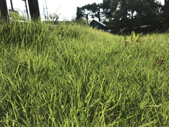 さて、芝生の手入れの全体像が分かったところで、今度は1年間の芝生のお手入れについて見ていきましょう。  今回は日本芝の高麗芝の年間スケジュールについてご紹介します。  除草に関してはご家庭の芝生ということで、健康、安全面を重視し、除草は除草鎌などを使い、手で抜くことをお勧めしております。  どうしても除草剤を使いたい場合は、高温期には使用できないものもありますので、使用上の注意をよくご覧になってからご使用下さい。