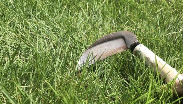 水 頻度 芝生 やり