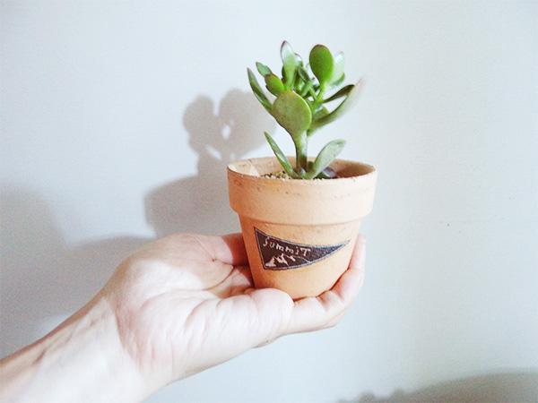 葉が小さいうちに五円玉を茎に通し成長させて、お金がなったような姿が流行したこともあるというカネノナルキ。成長期は夏型です。耐寒性はありますが、気温が5℃以下が続く場合は屋内に取り込んだ方が安全です。  カネノナルキは生長と共に茎が木質化していき、まるで木の様になっていきます。