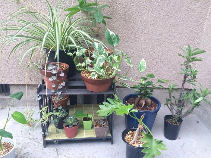 お気に入りの植物や雑貨を飾って、もりもりの植物コーナーを作ってみてください!