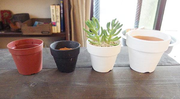 鉢の大きさは? 鉢のサイズは「大き過ぎず、小さすぎず」。多肉植物のサイズに合ったものがよいでしょう。大きすぎると、土の量が多くなり土の乾きも遅く、根腐れの原因にもなりかねないです。小さすぎる鉢は根詰まりの原因になります。