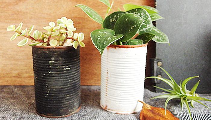シラフカズラはスキンダプサスと言う名前でも流通しています。  シラフとは白斑のことで、確かに葉に斑が入っていますよね。そこががとってもおしゃれです!  耐陰性もあるので明るい室内で育てることができます。  つる性を意味するカズラという名がついているだけあり、どんどん這うように生長していきます。置いて垂らして飾っても素敵です。ぶら下げて葉を垂らすのも、おしゃれに飾るポイントだと思います。
