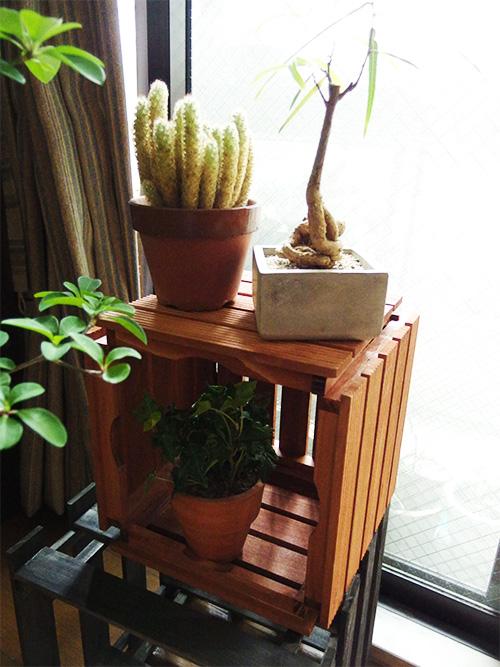 棚になります。すのこの棚に比べると光の入る量は少な目。下には園芸用品などを片づけて、上に置いて使うほうがおすすめです単純に先に作った鉢カバーを横にしただけです。