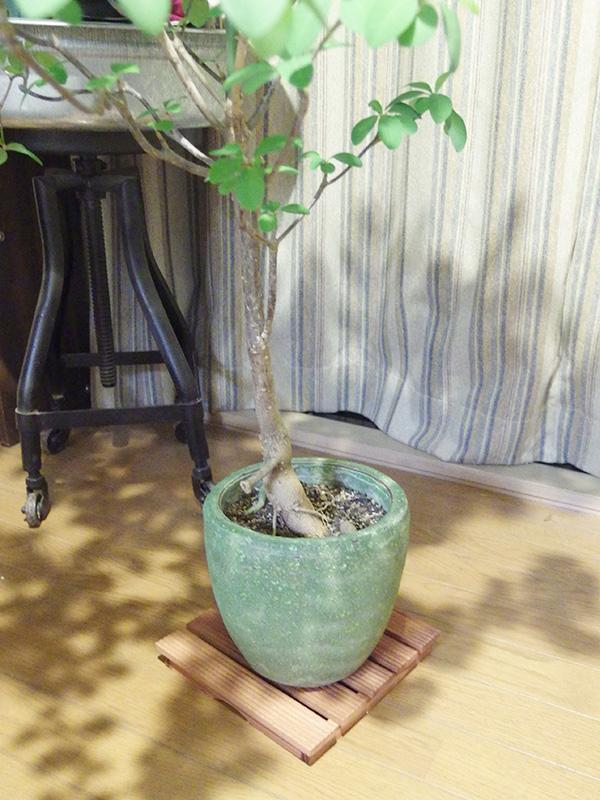 室内でも鉢の下に。ウッドデッキにキャスターをつければ、移動も楽に。