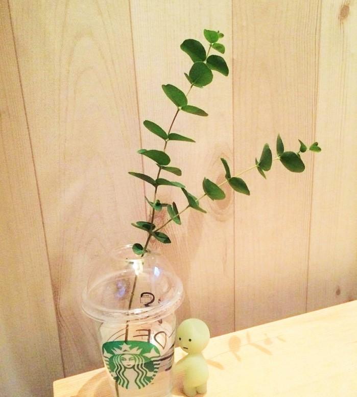 切り花としても売られているユーカリはお水に入れて飾ることもできます。