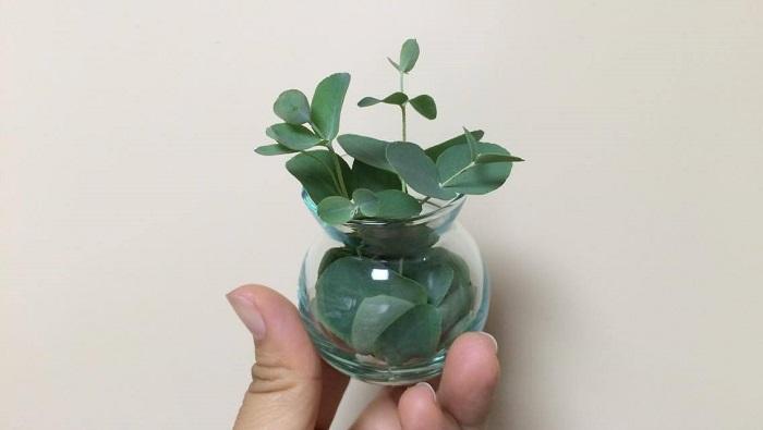 剪定の枝が少ない時は、葉や小枝をビンに入れるだけでも香りを楽しむことができます!