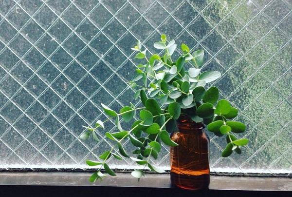 丸葉のものから、葉が長いものなど種類も豊富。香りも楽しめることもあり人気のユーカリ。ドライフラワーにしやすく初めての方にもおすすめです。