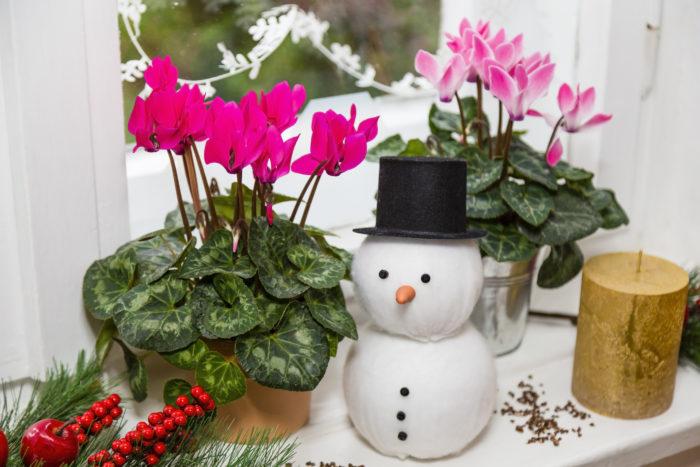 ガーデンシクラメンは、室内で育てられているシクラメンの中でも耐寒性のあるものを品種改良して作られた品種です。一般的なシクラメンより小さいサイズで、冬の屋外でも楽しむことができます。小さくてかわいいので寄せ植えにも人気です。  本格的に寒くなってから植えると、根がはりにくくなってしまい、花つきが悪くなってしまうので、秋のうちに定植しておきましょう。霜に当たっても枯れることはありませんが、マイナス5度を下回ると枯れてしまうので、寒冷地では注意しましょう。
