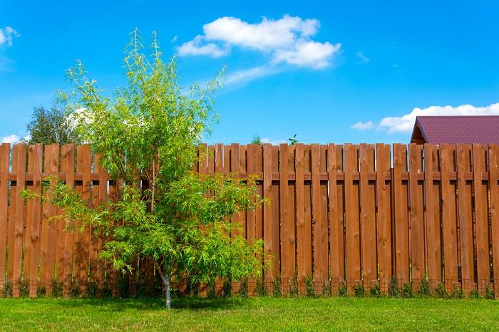 シンボルツリーの意味合い、その名の通り象徴となる樹木のこと。その家を象徴してくれるような庭木や観葉植物のことをシンボルツリーと言い、新築のタイミングで記念樹としてお庭に植える方や室内に大きめの樹形のある観葉植物を置く方が多くいます。