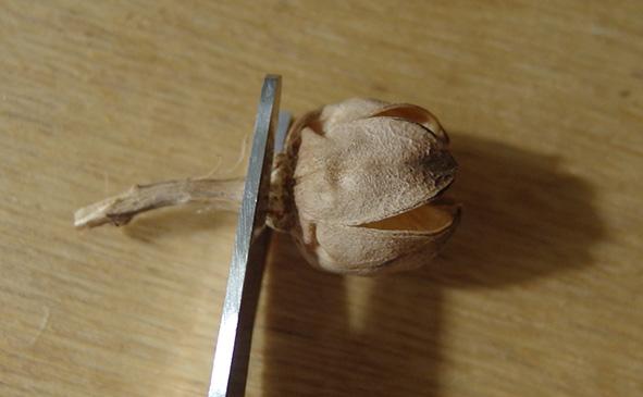 長い部分はハサミでカットして使います。