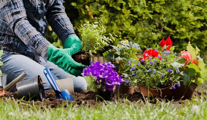 購入してきた苗をそのまま植え付けてしまうと、雨が降った日などは葉に泥はねを起こし、蒸れやすく、病気になりやすい状態になってしまいます。  「下葉処理」といって、購入してきた苗の下の方の葉を落として風通しの良い状態を作ってください。下葉処理をすることで、しっかり一つ一つの苗を観察するので、植え付ける前に病害虫を未然に発見することもできます。早急に薬剤などをスプレーすることで、病害虫の被害を最小限にすることができます。