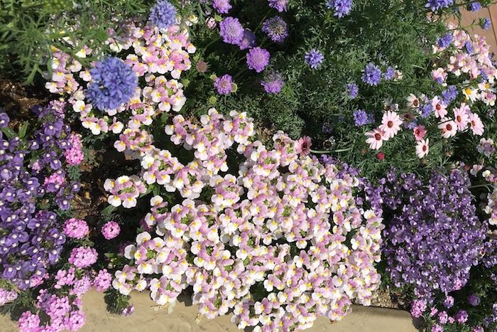 イメージが決まったら、植え付ける前にポットごと花を実際に並べてみる「間配り」という作業をしましょう。苗が生長することを考えて花と花の間に充分な株間をとり、全体のイメージを整え、色合いや高さ、ボリュームなどをみます。この時花の高さは手前が低く、奥が高いものを植えます。  隣同士に花を並べるときは、少し前後をずらしてジグザグに植えてあげると自然な仕上がりになります。