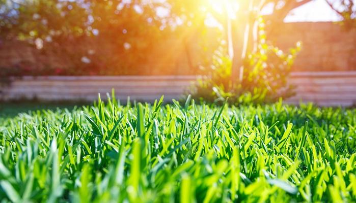 次に、芝生を張るのに適した時期というものがあります。  関東~西日本は芝が目覚めだす春3月中旬から6月が適しています。  東北~高冷地では4月上旬以降から6月が適期です。  芝を張った後は根が活着するまで頻繁に水をやる必要がありますが、梅雨の前に芝を張ることでその後の芝生の水やりがとても楽になります。  真夏を避けた9月頃にも芝生を張ることはできますが、冬に休眠期を迎えるため出来れば春に張ることをおすすめします。