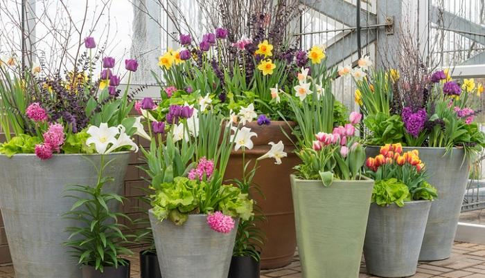 この時に、もう一つポイントとなるのが、高さをつけて奥行きを出すということです。花の草丈を考慮に入れながら、手前は低い草丈の花、奥は草丈の高くなる花を配置しましょう。