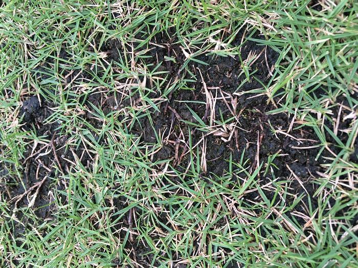 黒い は 隣 芝生 の