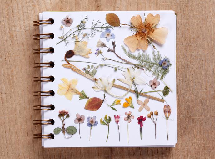 材料 ・押し花にしたい花や葉 ・ティッシュペーパー ・段ボール ・クッキングペーパー2枚 ・輪ゴム ・ピンセット ・密封できる袋