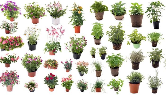 みなさんはどんな色の花が、そしてどんな種類の花が好きですか?まずは、花壇や寄せ植えでイメージの核となるような花の色、または種類を選びましょう。  例えば、春ならピンクのイメージで花を選び、シンプルに抑えたいならカラーリーフや白い小花を使ったり、反対に秋ならガラッと花の種類や色のイメージも変え、例えばゴージャスな深い色味のケイトウに、渋い色味のカラーリーフを持ってきたり、一つ花を決めた後、洋服のコーディネートを決めるようにイメージに合わせて植える花やカラーリーフを選んであげましょう。