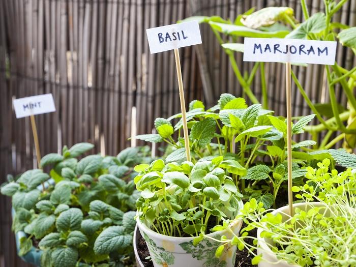 最近、ベランダやバルコニーで花・植物を育てたり、家庭菜園として楽しんだりしている方が増えてきていますね。ベランダやバルコニーでガーデニングをはじめたい!グリーンのコーナーを作りたいという方も多いはず。  新しいお家に引っ越したら、ベランダでガーデニングをしたい!という方いると思います。ベランダガーデニングを始める前に見ておきたいポイントを紹介します。
