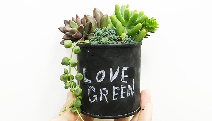 ぎゅっと缶に寄せ植え。最後にグリーンネックレスを挿して完成。