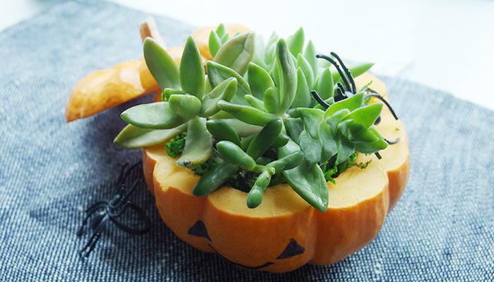 かぼちゃ 多肉植物の寄せ植え