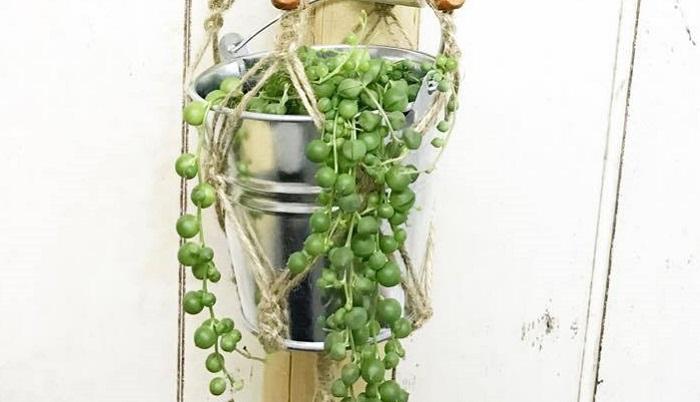 """また、グリーンネックレスには、風水で大切な幸せ要素""""緑色・玉・揺れる""""の3つが含まれているので、気の流れを良くする効果のある植物だそうです。"""