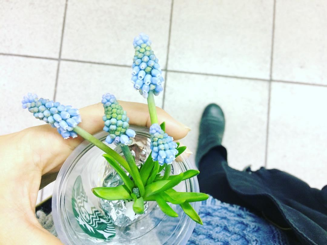 いかがでしたでしょうか。  生花店でも球根つきのムスカリが出回っていたりするので、お部屋で気軽に楽しむことができます。ぜひこの春に可愛いムスカリと過ごしてみては!