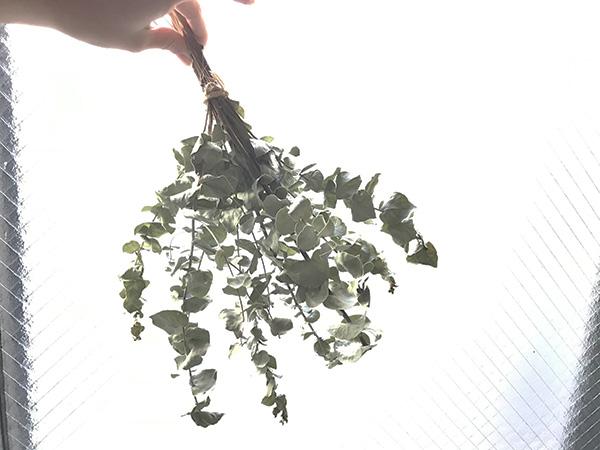 ただ束ねて吊すだけでも絵になります。時間がない時や手間を省きたい場合にはさっとまとめて吊るしてみては。私もアレンジする時間の余裕がないときにはこの手をとります。あとでばらして使うこともできます。ドライのユーカリがあれば何かと使えることはあるので便利です。  枝も葉っぱも隅々まで使えるユーカリ。ほぼ捨てるとこなし!だなと実感。香りも楽しめるのも魅力。  どれも簡単に短時間でできるものなので気軽に楽しんでみてくださいね。