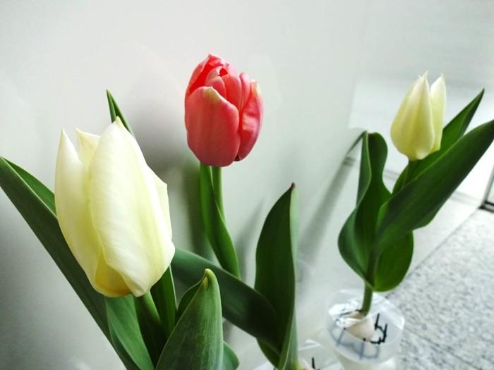 開花しました!部屋が一気に華やぎます!