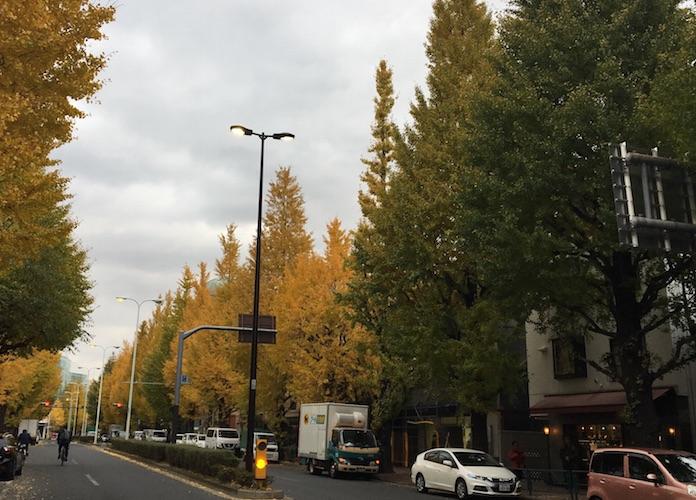 扇型をしているイチョウの葉は、誰もがよく知っており、街路樹でよく見かけるイチョウの木です。  東京の木は、都民投票で「イチョウ」に決定し、 昭和41年11月14日発表されました。  大正12年に発生した関東大震災。一面焼け野原となった東京で奇跡的に生き残ったとして、今も大手濠緑地で大切に育てられているイチョウの木があります。まさにイチョウの木は、東京都の木として相応しい木なんですね。  ちなみに東京都のマークは、東京都の頭文字「T」を中央に秘め、三つの同じ円弧で構成したものであり、色彩は鮮やかな緑色を基本とするもので、東京都の躍動、繁栄、潤い、安らぎを表現したものだそうですが、イチョウの葉のような形をしています。