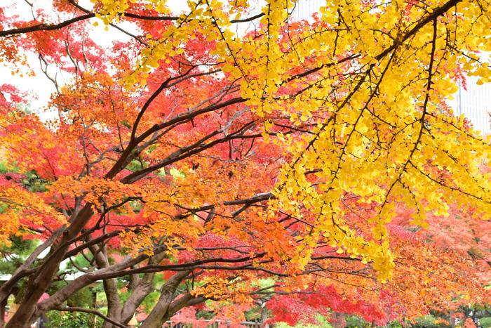 美しい紅葉が見られるのはたくさんある樹木の中でも落葉広葉樹だけ。落葉広葉樹が多く存在しているのは日本を含む東アジアやヨーロッパの一部、北アメリカの東部に限られているそう。  実は、紅葉がみられること自体が貴重なんです。