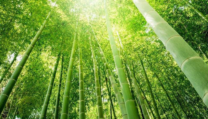 竹は真直ぐ上に伸び、さらに生長が早いことから、真直ぐな心と生命力の象徴と考えられてきました。竹はその生長の早さ、丈夫さ、しなやかさも相俟って、生活に密着した植物であり、神聖な植物でもあったようです。