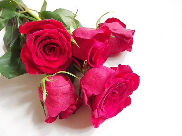 大切な人への贈り物として、花を贈ってみてはいかがでしょうか。  素敵な「ボタニカルギフト」になるはずです。