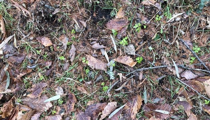 冬の暖かい日に、木の芽や草の芽が出ていることを言います。土手などを眺めると枯草のなかにも鮮やかな緑がすこし見られ、春を予感させます。