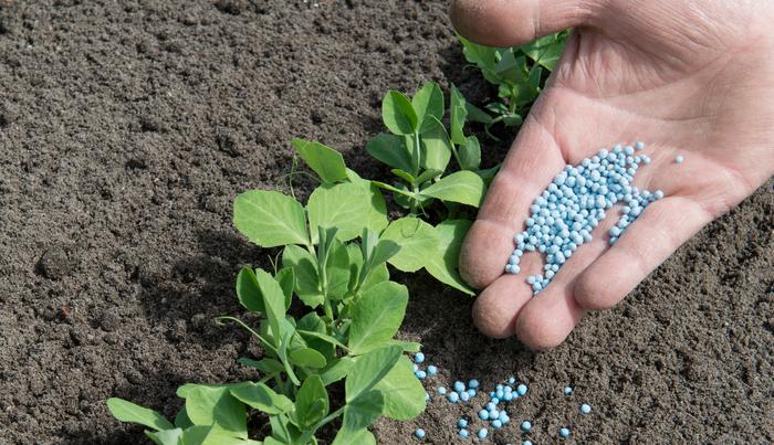 肥料とは、植物を生育させるために必要な栄養分を意味します。  肥料の3要素と呼ばれる成分は、窒素(N)・リン酸(P)・カリ(K)のこの3つです。  他にカルシウム、マグネシウムを加えると肥料の五大要素となります。  窒素(N)の働き  主に植物を大きく生長させる作用があり、特に葉を大きくするため葉肥(はごえ)と言われています。過剰に与えると、植物体が徒長し、軟弱になるため病虫害に侵されやすくなります。  リン酸(P)の働き  リン酸は、花肥(はなごえ)または実肥(みごえ)と言われ、その名の通り「花」や「トマト」などの実を肥やす働きがあります。  カリウム(K)の働き  主に根の発育に関係するため根肥(ねごえ)といわれます。