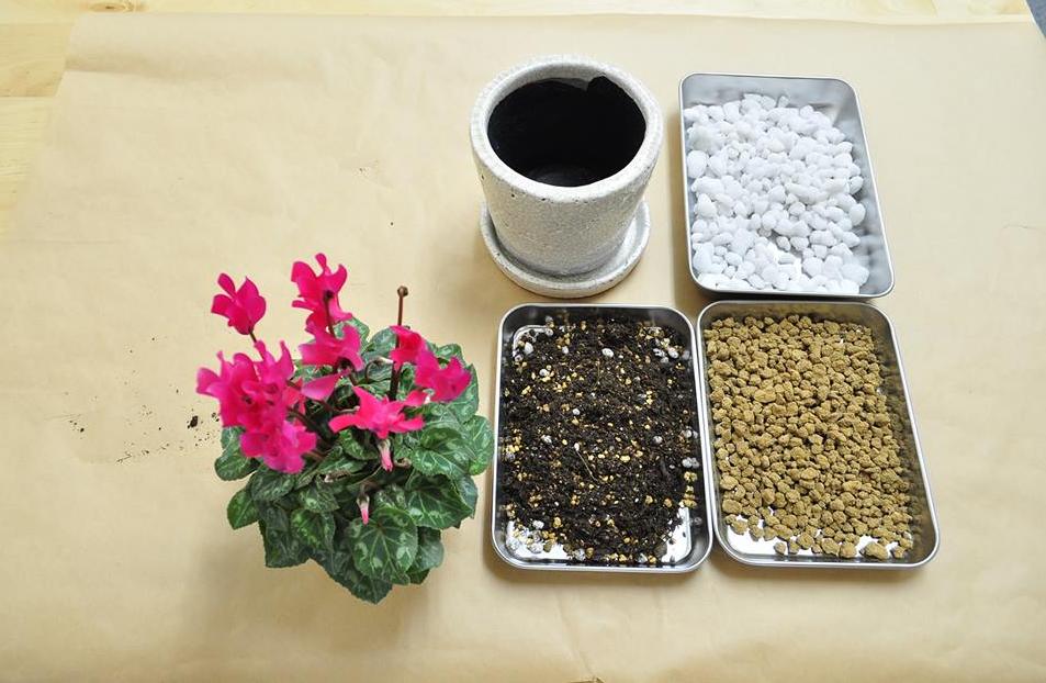 今回は、この3種類の土を使用しました。使用する用土は赤玉土、腐葉土と一般的な植物と変わらない普遍的な用土で間に合います。用土を少し凝りたいという方はピートモスを使用して保水性、通気性を高めよりよい環境を整えてあげましょう。3割程、混ぜ合わせると効果的のようです。