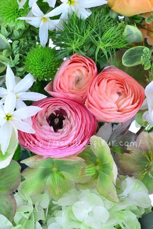 ラナンキュラスは、つぼみのときはコロンとしたお団子みたい。少しずつふんわりと開いて、つぼみのサイズの時の花の直径と開ききった花のサイズでは2、3倍は違います。(品種によって差があります)