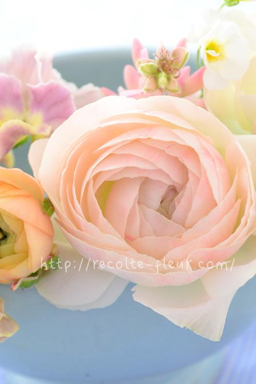 こちらは白に近い淡いピンク。なんとも優しい雰囲気。