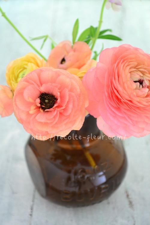 花芯が見えました。つぼみの時は、花芯はまったく見えないので、開いてからのお楽しみです。
