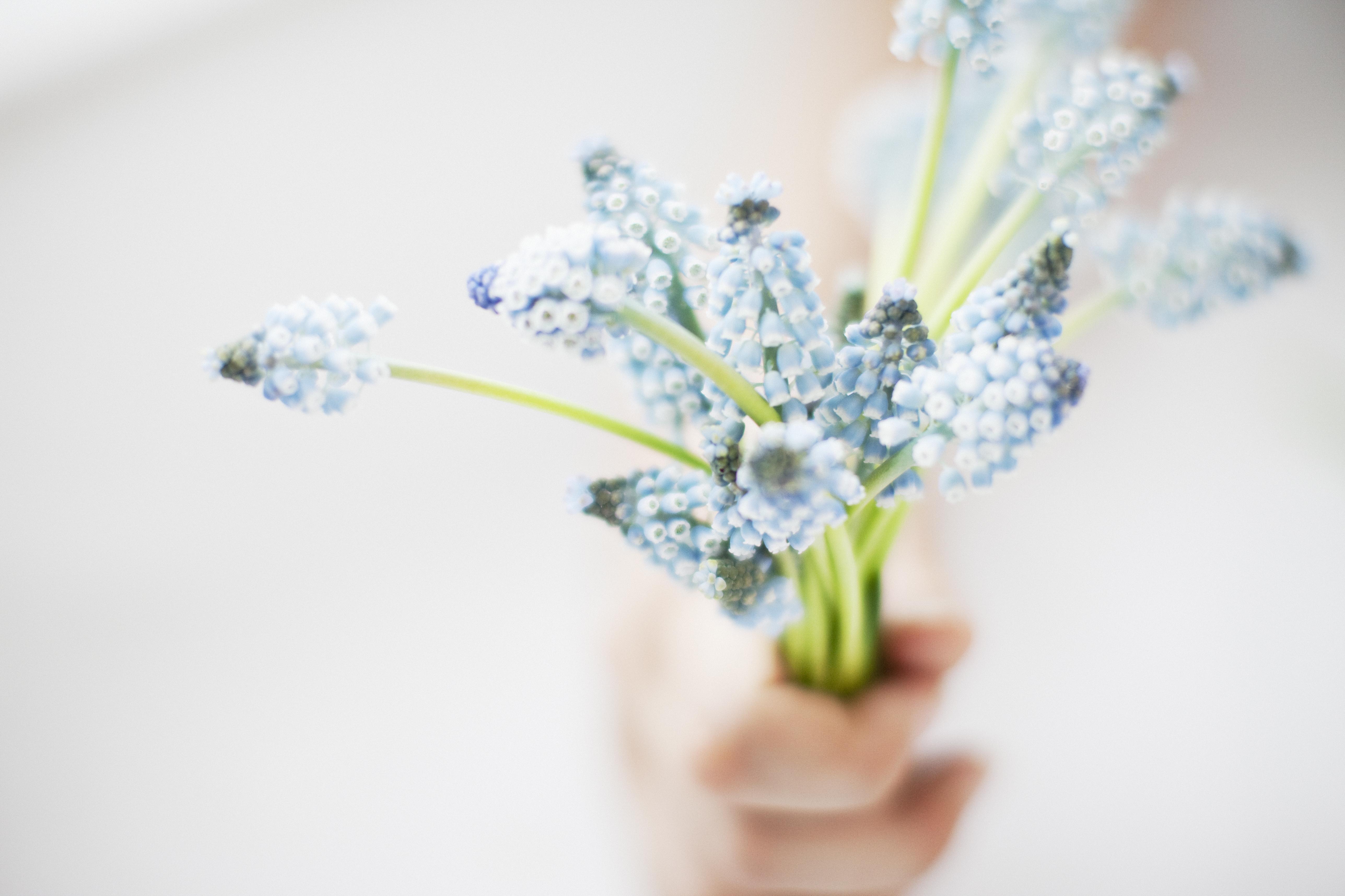 1.ムスカリの素敵な花言葉  ヨーロッパにおいて青い花は悲しみを意味を持つようです。そして、その悲しい気持ちから立ち直るという思いを、「夢にかける思い」、「明るい未来」と表現したと言われています。春に咲く小さく凛とした姿から、そんな素敵な花言葉を持っているムスカリ。春に飾りたい花のひとつです。  2.ムスカリのふんわりとした春の香り ムスカリの名前の語源は、「ムスク」に香りが似ていることからつけられたそうです!  ムスクとはジャコウジカの雄からとる 香りを付けるための原料のこと。たしかに、良い香りがしますよね。ピンと伸びた姿は見ていて、とても癒されます。このムスカリの香りと姿に魅了される方は多いのではないでしょうか。   3.ムスカリの色合いが可愛らしい 花の色はコバルトブルー、白、青紫色、群青色、水色などなど。春らしい淡い色から濃い青や紫までいます。そんな色合いやサイズから、なんだか小人が育てていそうな雰囲気の可愛い花です。